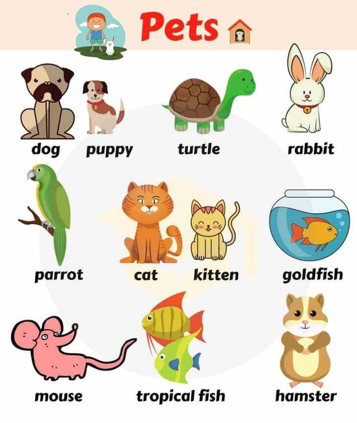 my-pet topic